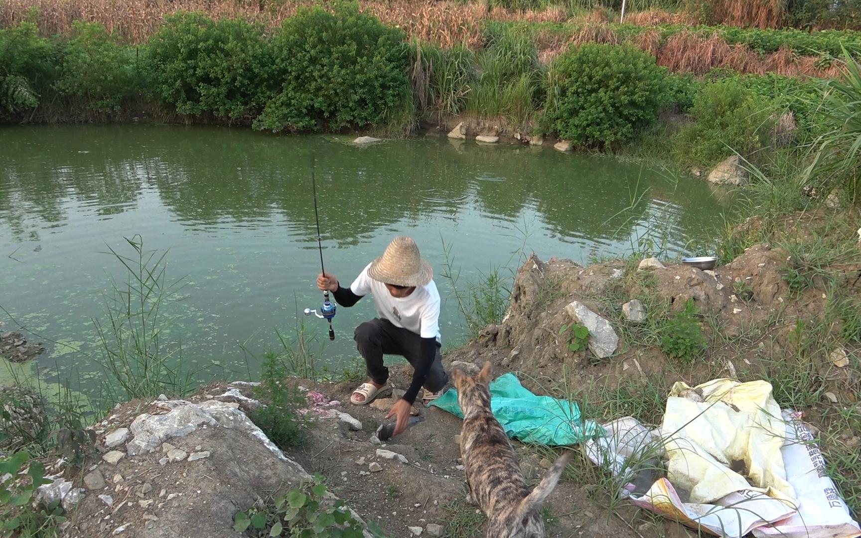 小明用海竿到老表鱼塘试钓,没想到十多分钟狂甩3条鱼,过瘾了