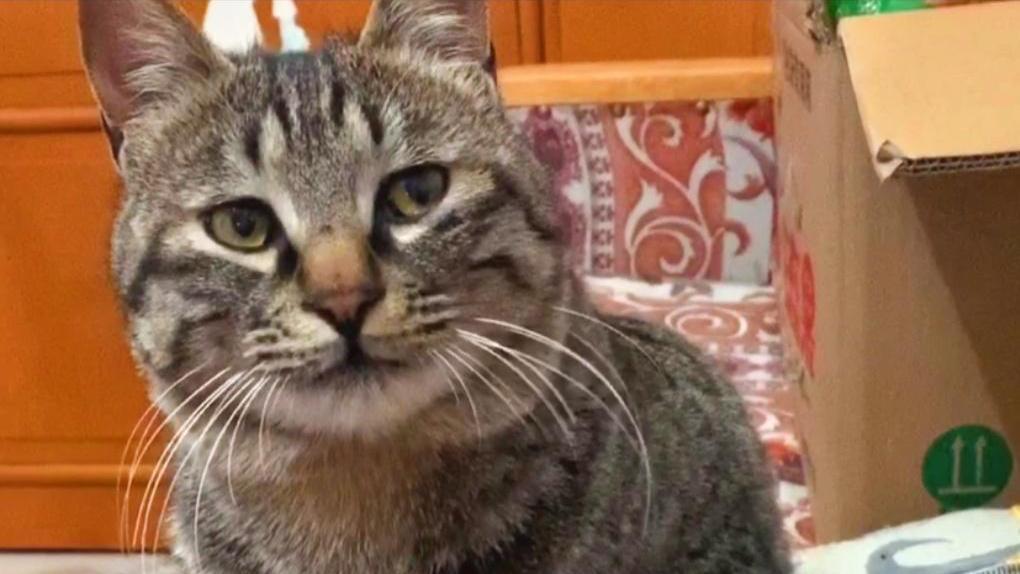 当你对你的猫学猫叫,看看它是什么反应?感觉被嘲笑了