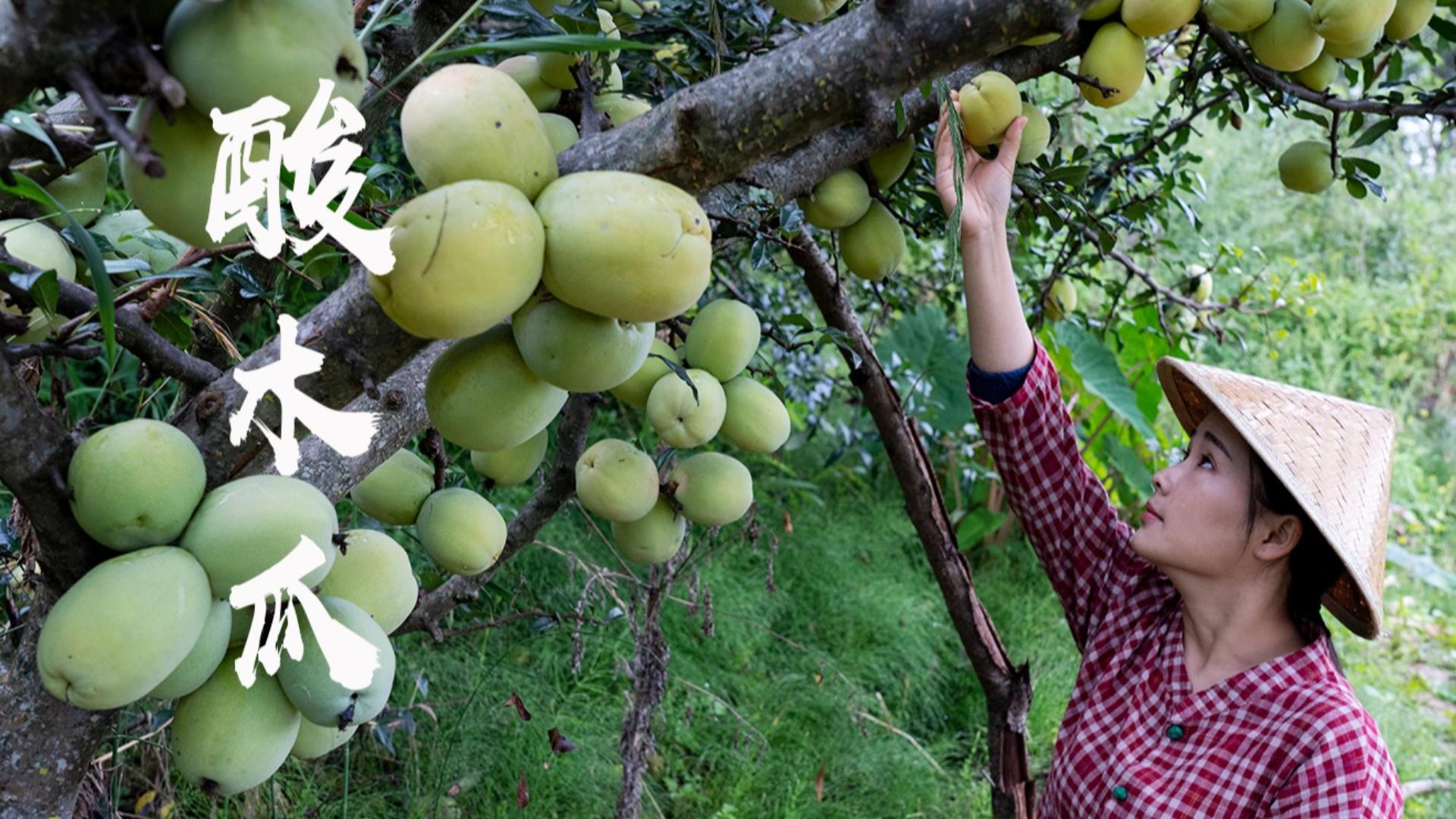 酸木瓜:我心中的酸果之王