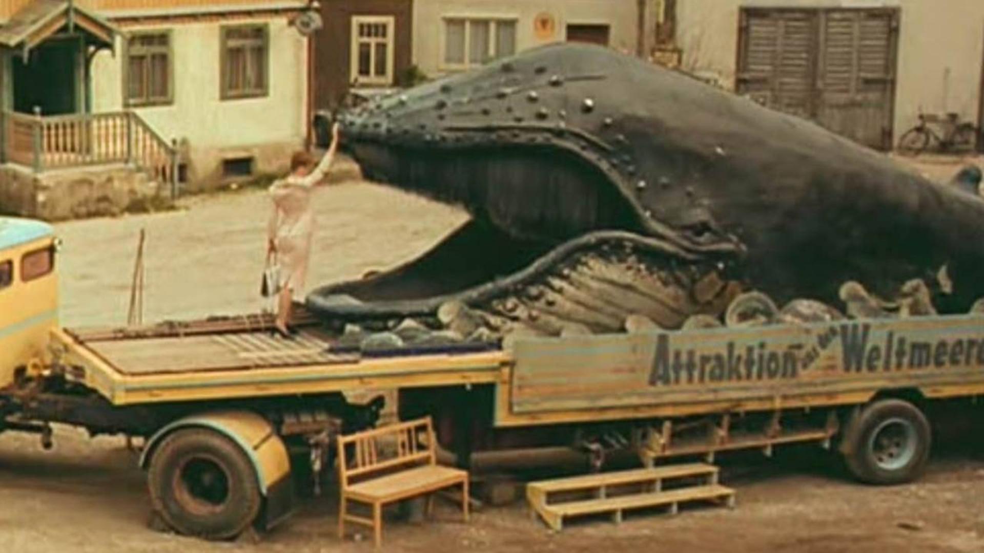 鲸鱼尸体竟有神秘能力?只要男人进入其中,都能实现个愿望