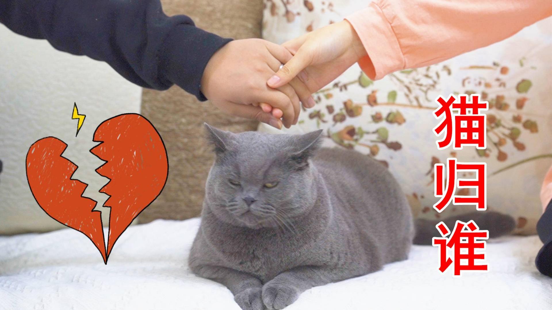 假如情侣分手了,一起养的猫应该归谁?