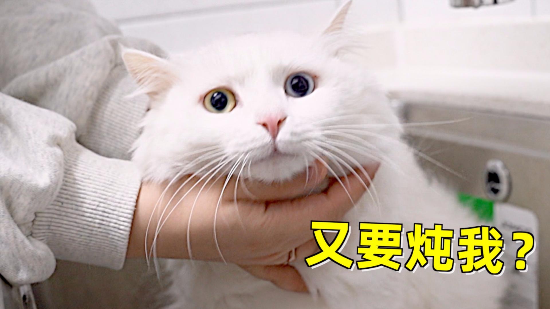 把洗猫拍成舌尖上的中国,还撒上玫瑰花瓣入味,仙女猫瑟瑟发抖