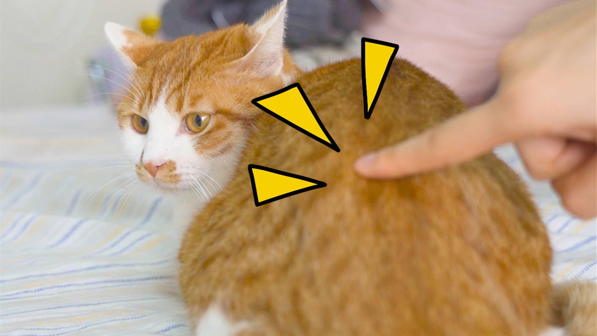 猛戳一下猫屁屁,猫会有什么反应?猫:别按我的开关!