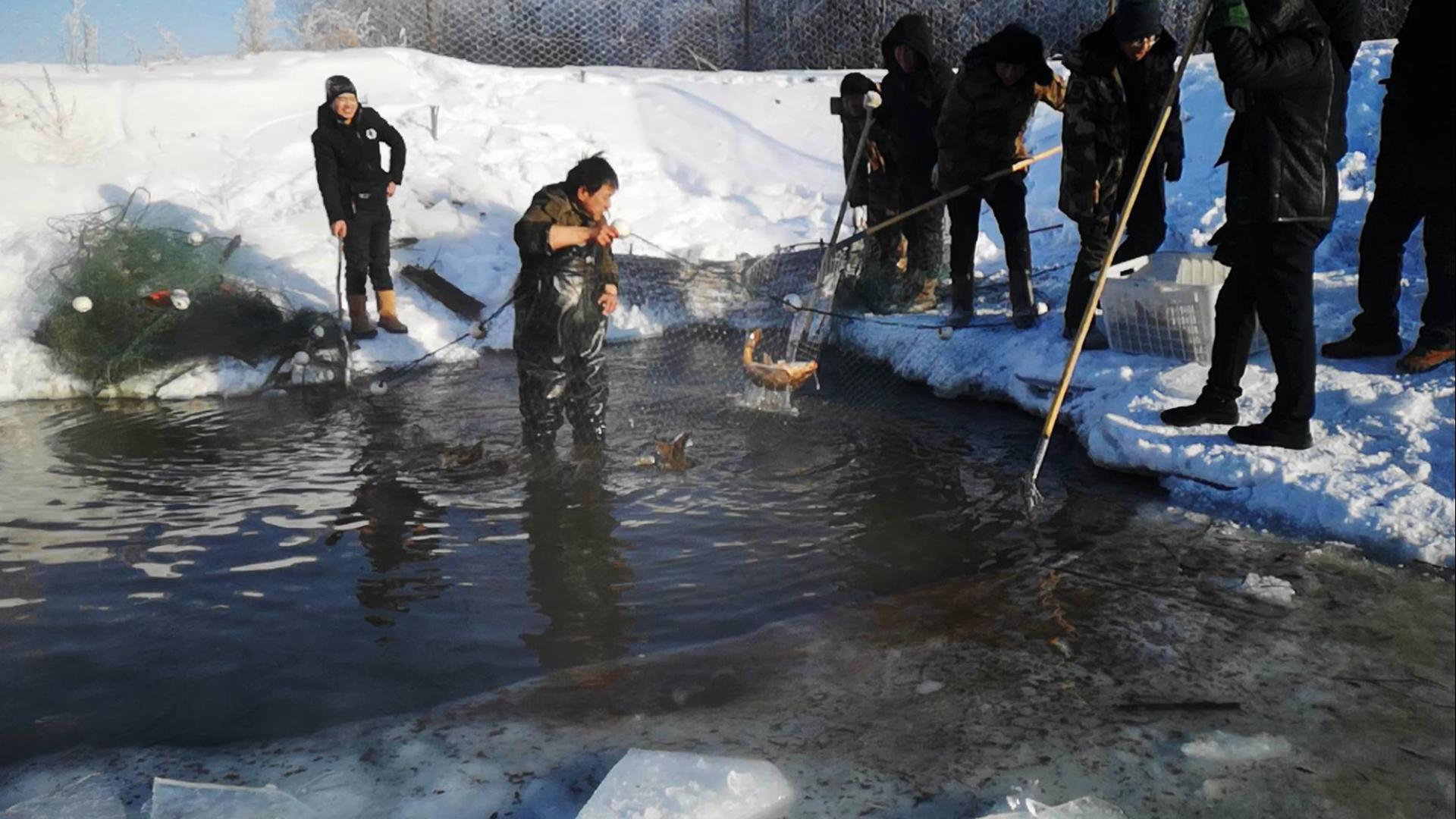 零下41度天气水还能不结冰?高寒地区暖泉里的冬捕,渔获爆网了