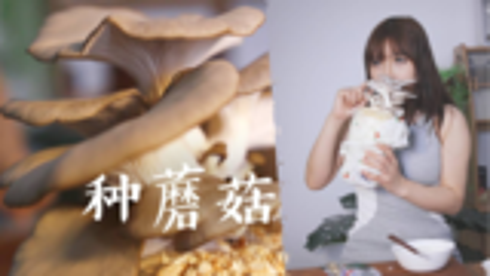 买了4个种植包打算吃个蘑菇火锅,结果只种出了平菇,只好炸一炸做天妇罗了