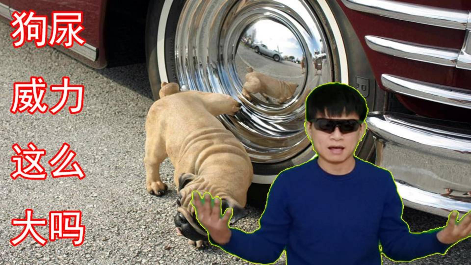 狗尿能够导致爆胎,这是真的吗?一个数字揭开真相