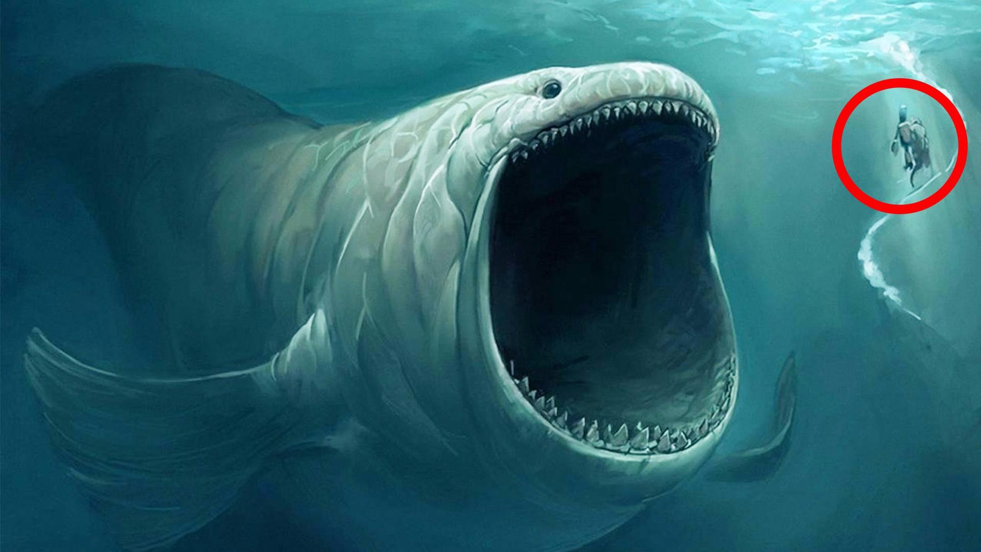 海贼王中的近海之主,在现实中真实存在,无人质疑的卡布罗龙!