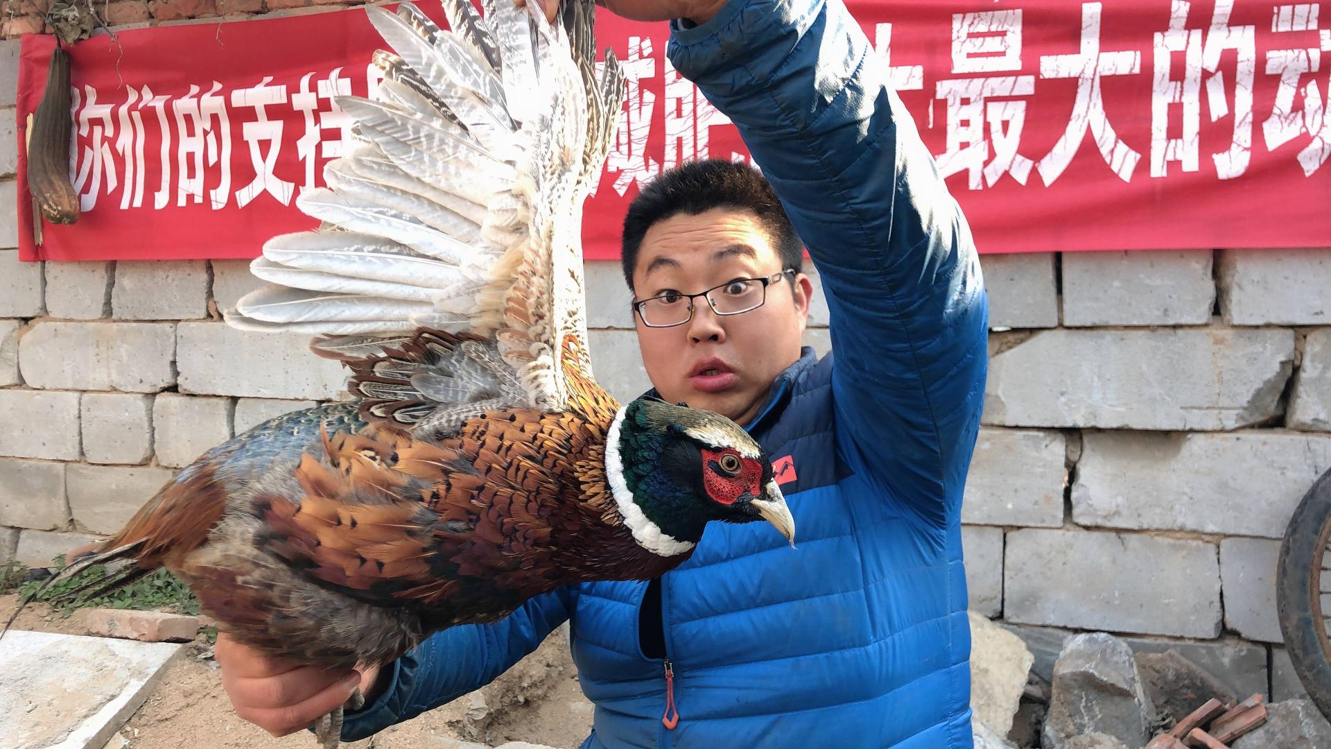 80元网购一只山鸡,不炒不炸,用芥末凉拌着吃,麻辣又过瘾