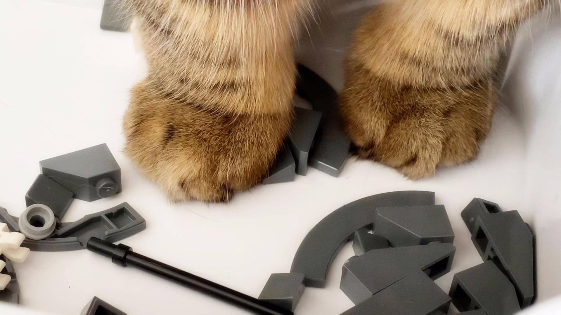 千万不要让猫碰乐高,不然的话…………玩的比你还起劲!