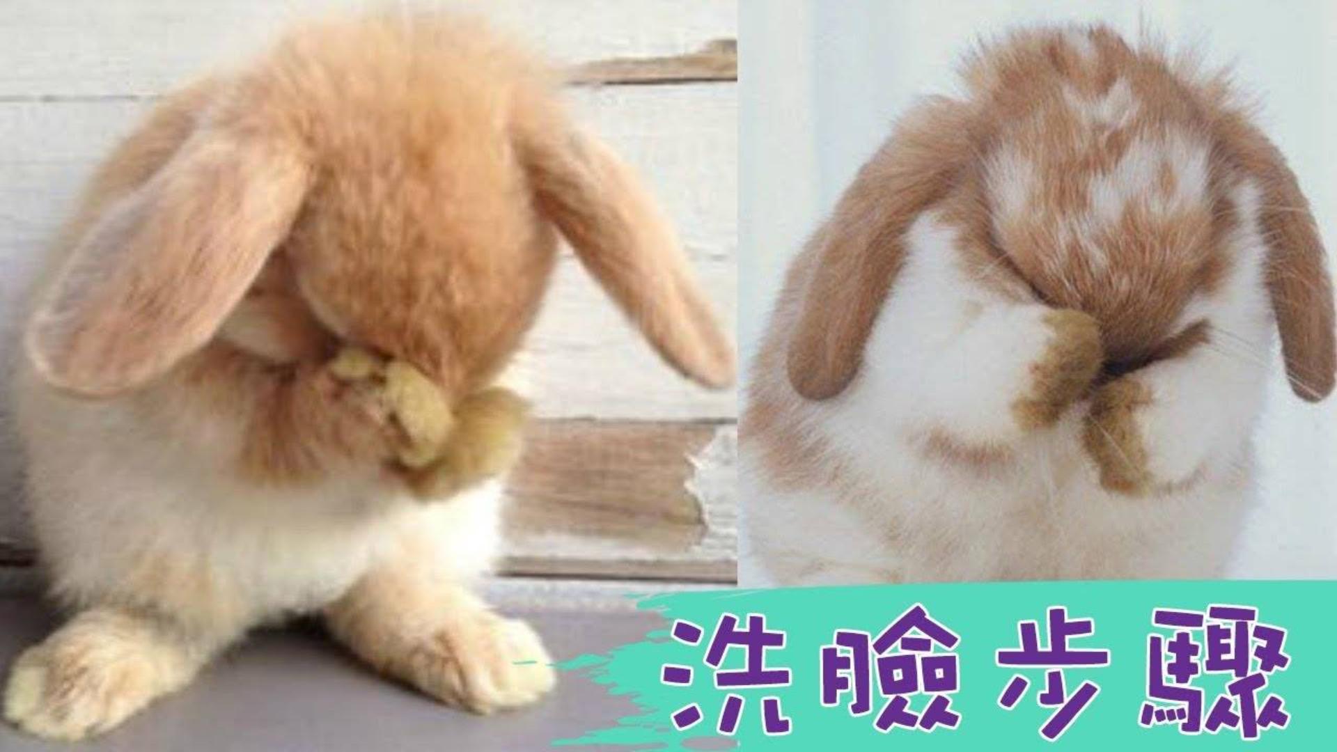怎么这么可爱!小兔兔洗脸有一定的步骤耶,有哪几个步骤你们看出来了吗