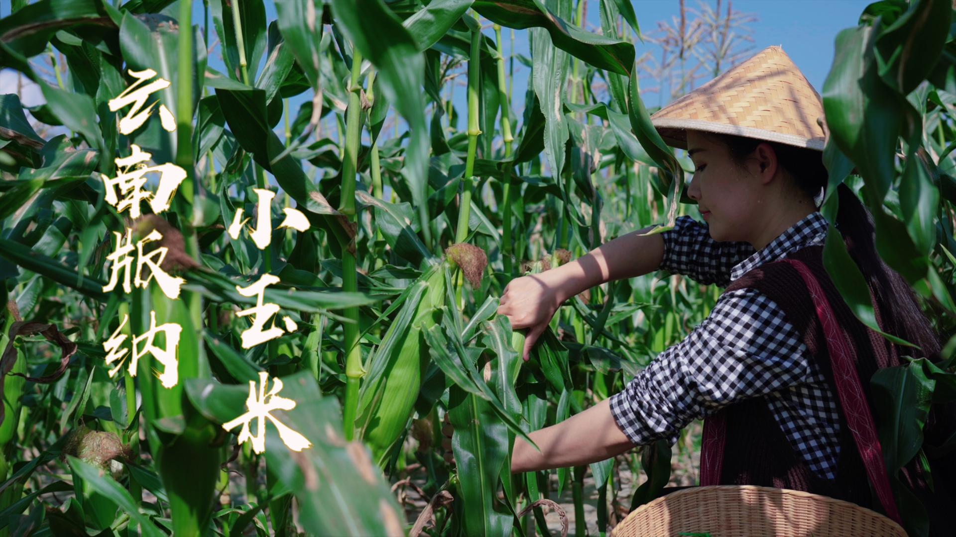 版纳小玉米——云南四季都能吃到的新鲜美味