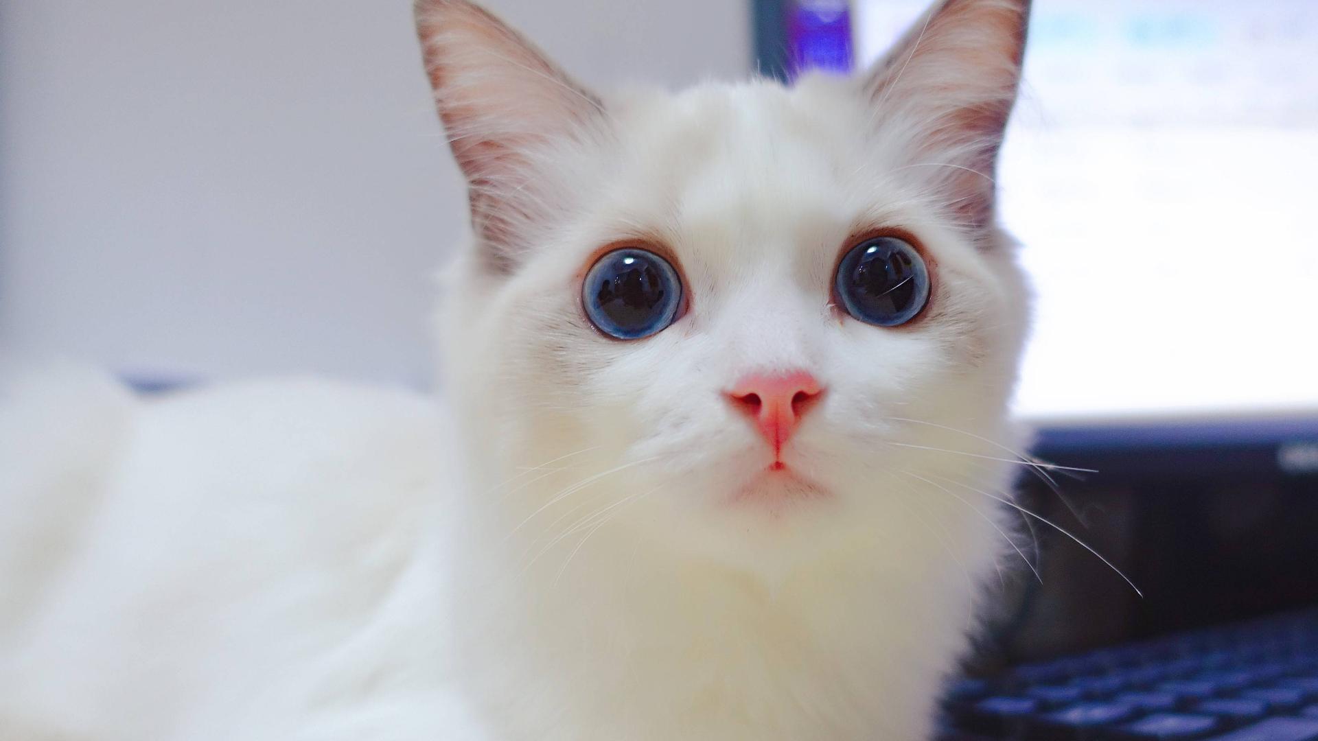 【人间真实】当下班回家的你想抱抱你的猫时