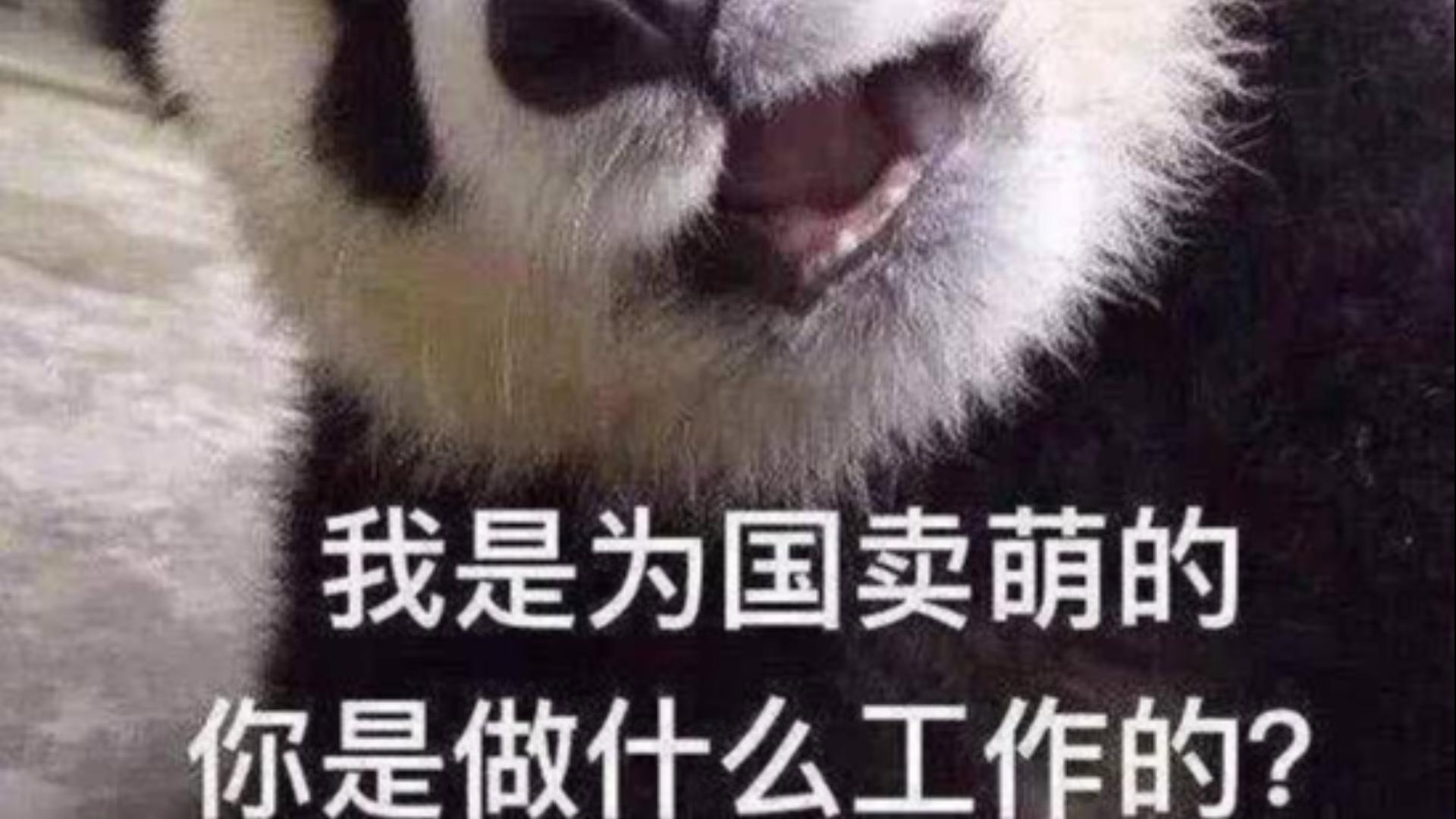 这才是猛男该看的片!!!【熊猫】  # 第十一期