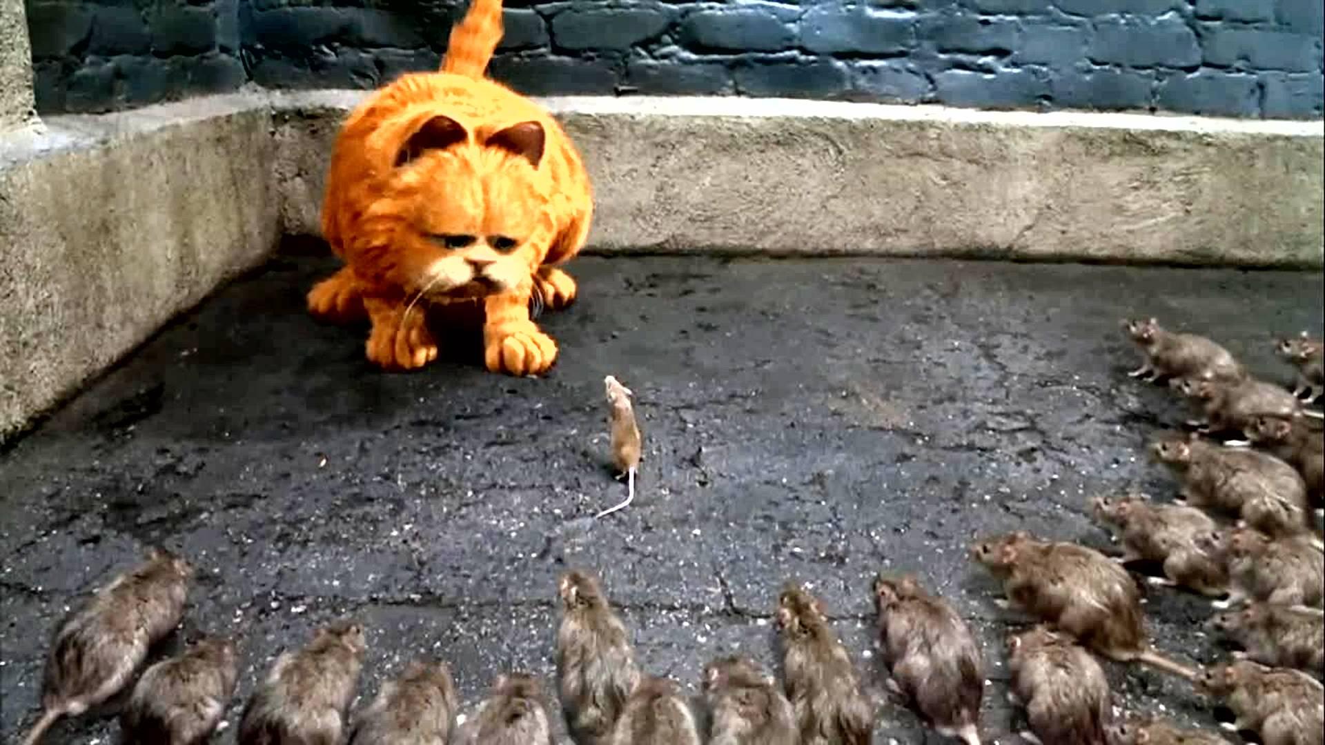 猫咪好心放了一只老鼠,没想到老鼠带着一堆兄弟,回来报恩!