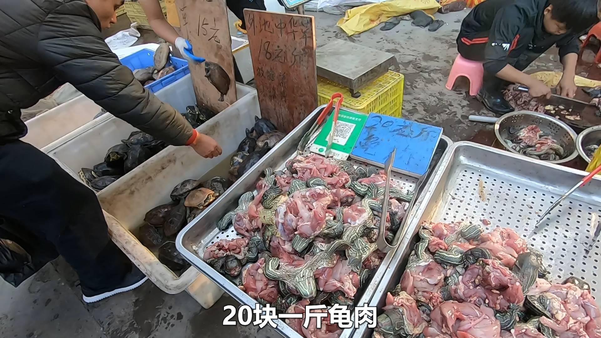 佛山顺德买乌龟,乌龟的肉和龟甲可以分开卖,20一斤龟肉?
