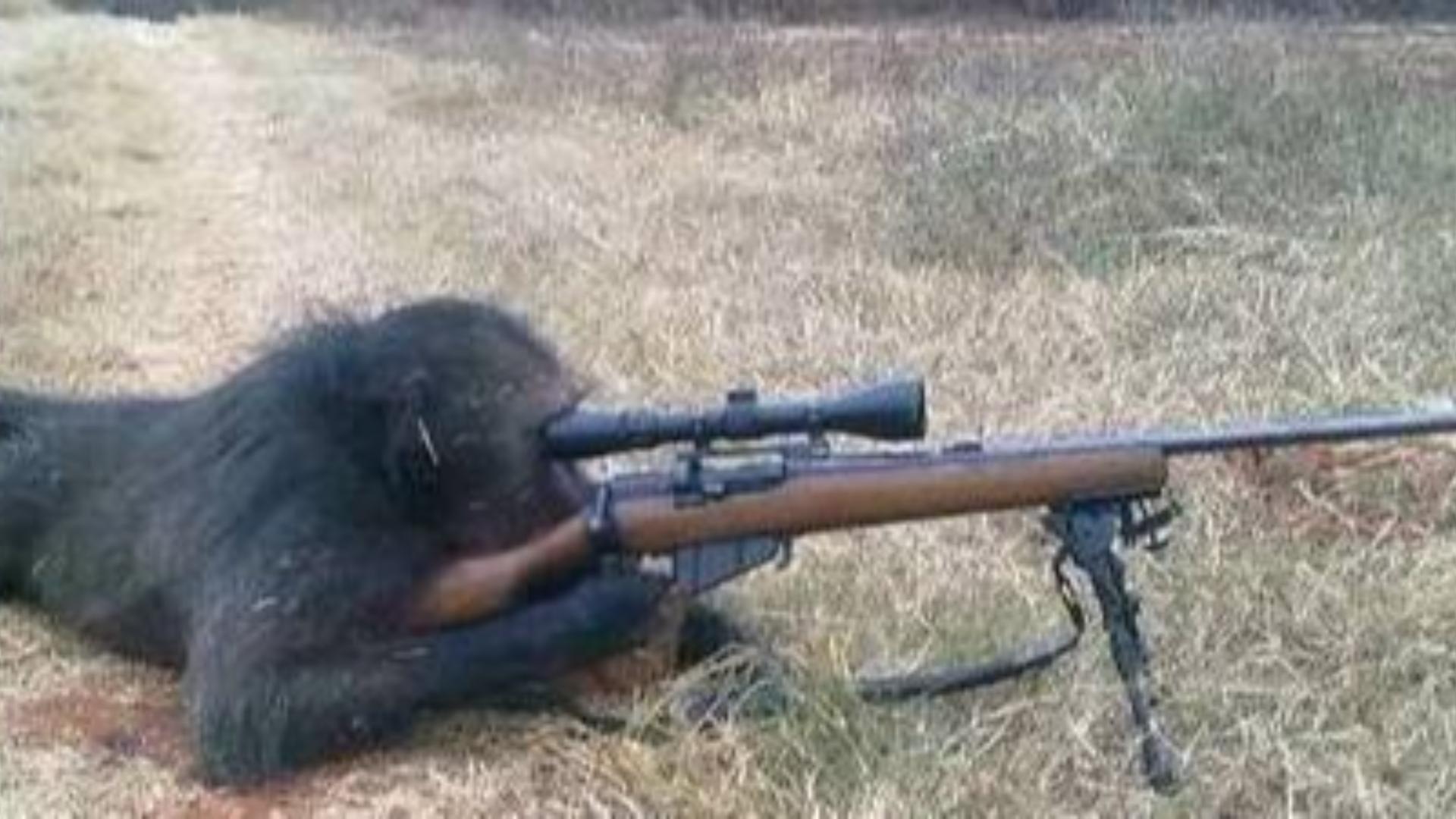 【战地5】当菜鸟狙击手拿起冲锋枪会有多爽