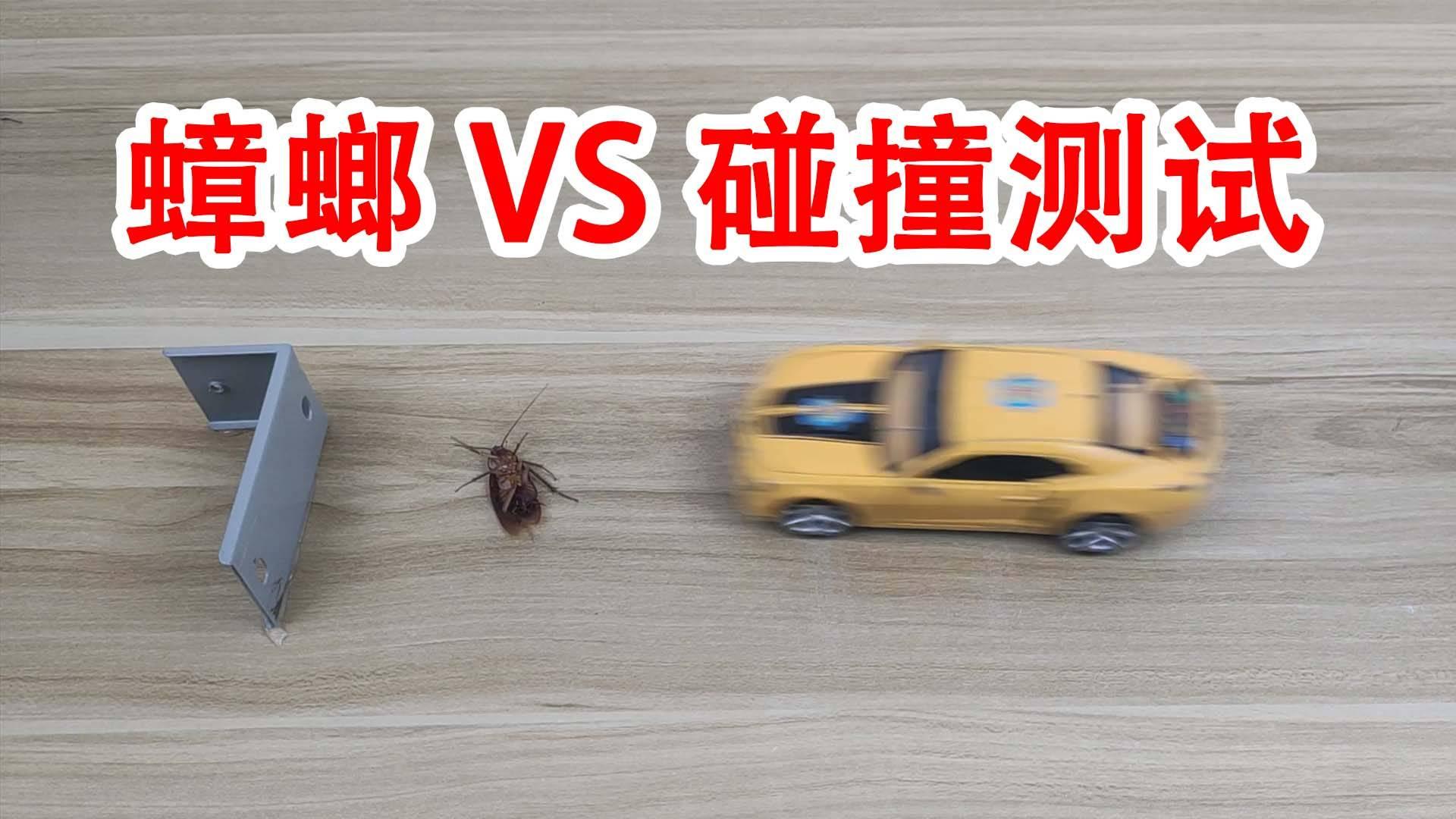 蟑螂VS汽车碰撞测试,顺便鄙视一下大众帕萨特!