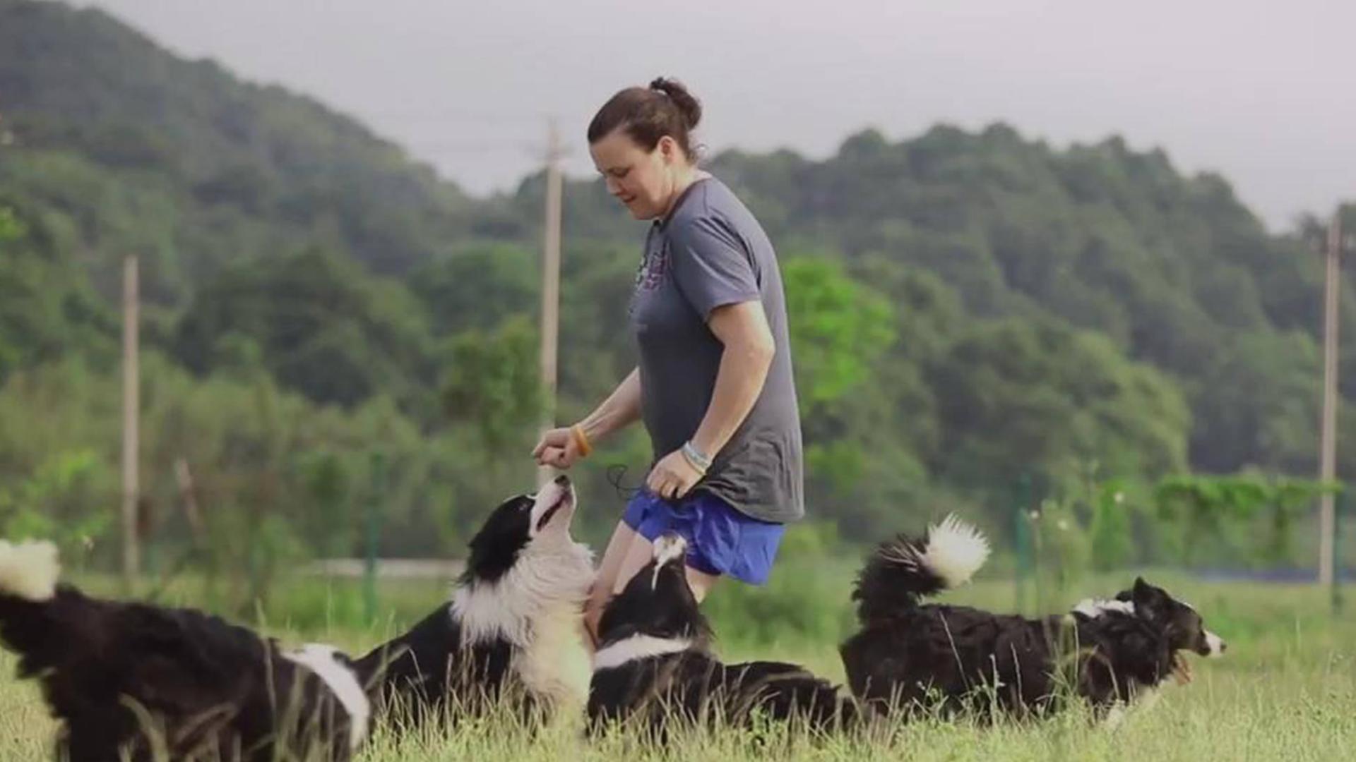 美国小姐姐定居中国做一名训犬师是什么体验?