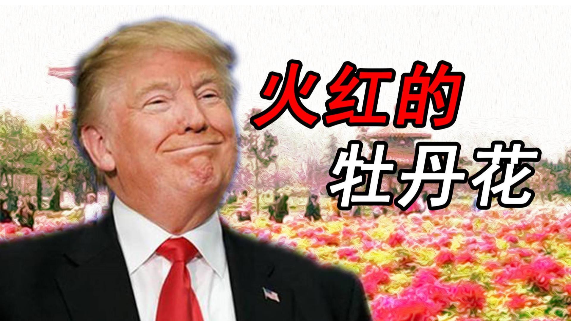 【川普】 火红的牡丹花(火红的撒日朗)