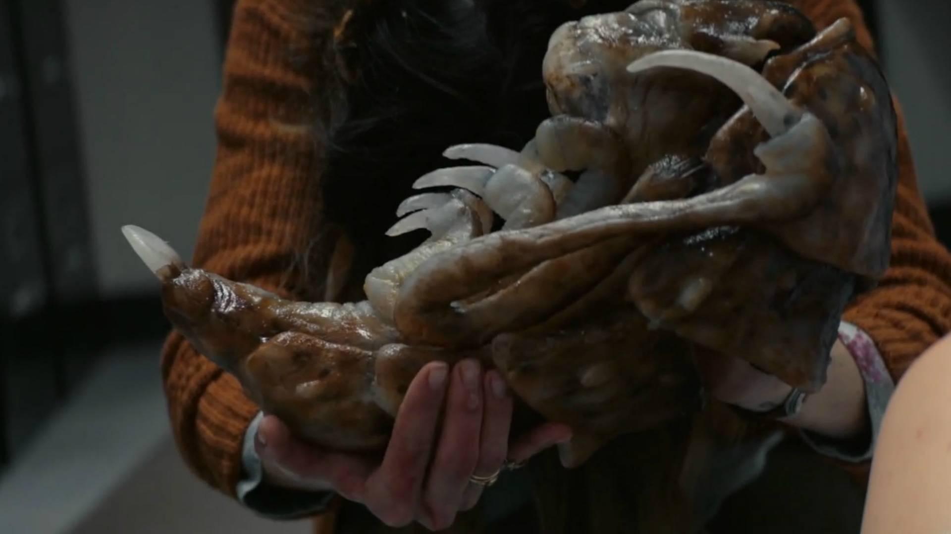 异形借助人类繁殖,三天就孵出一只幼虫虫后,一部怪兽科幻电影