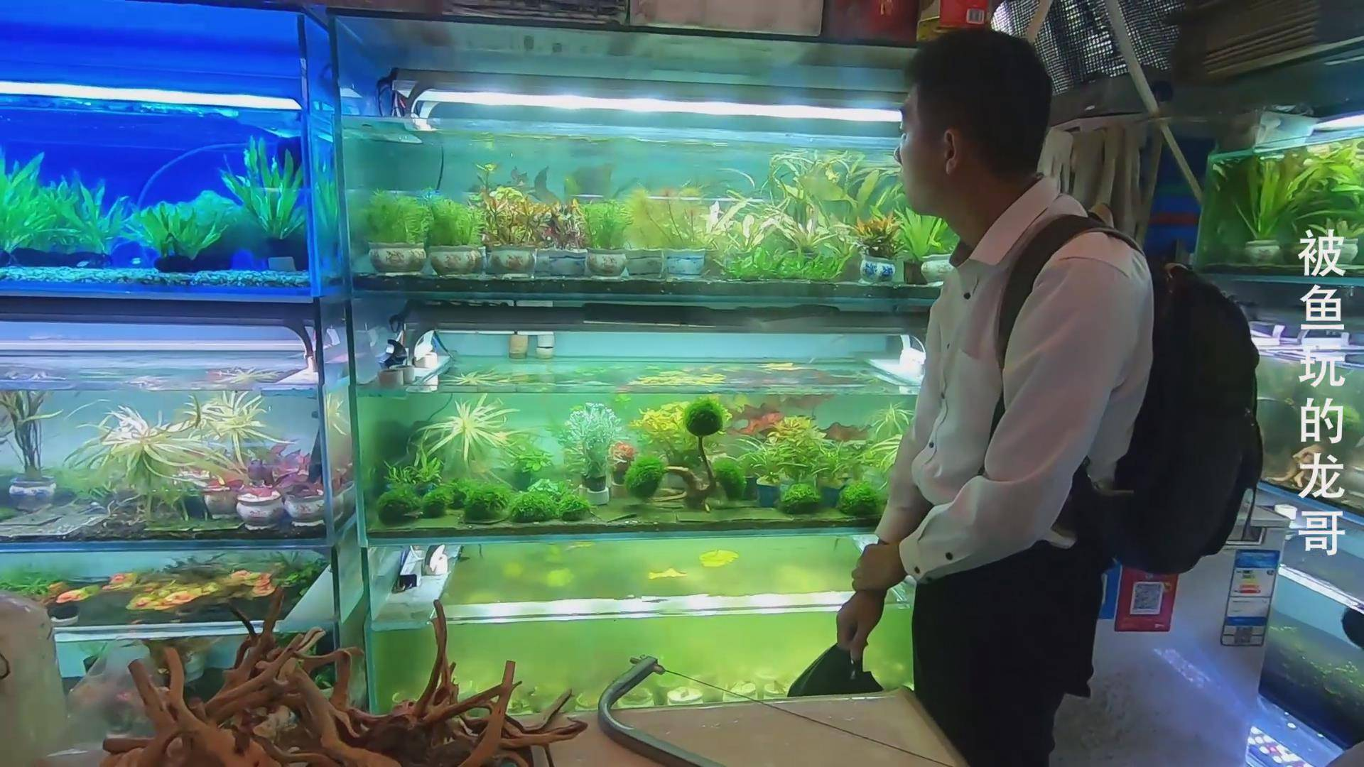 广州观赏鱼市场,鱼缸造景水草一条街