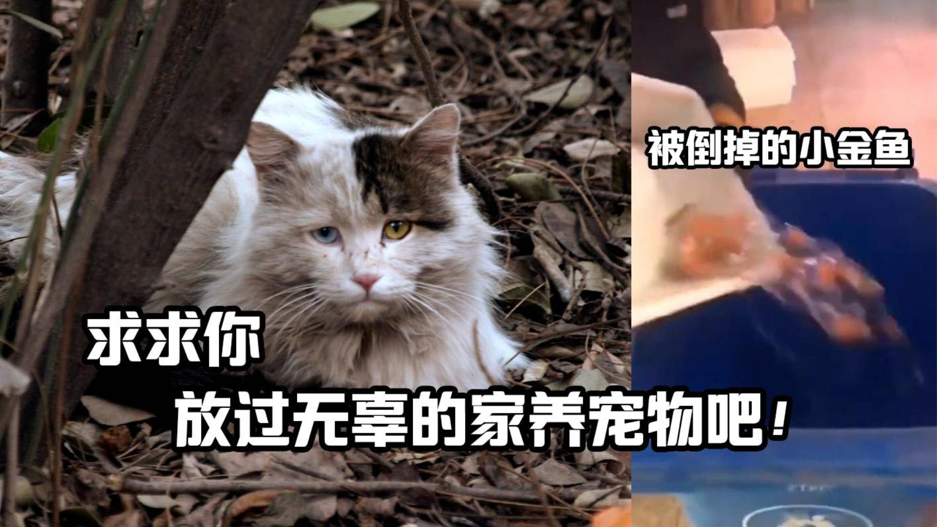 分析病毒学,打破家养宠物带有新型病毒的谣言!
