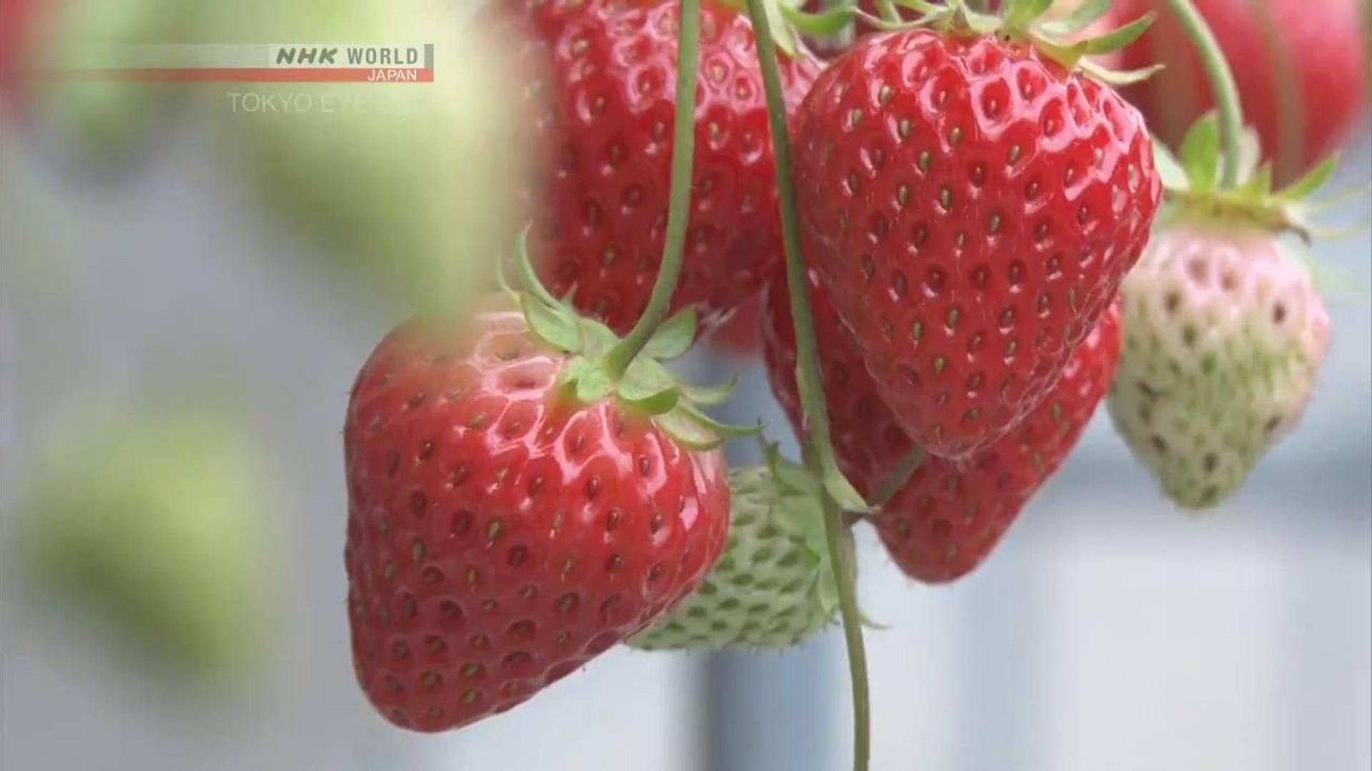 冰激凌和草莓
