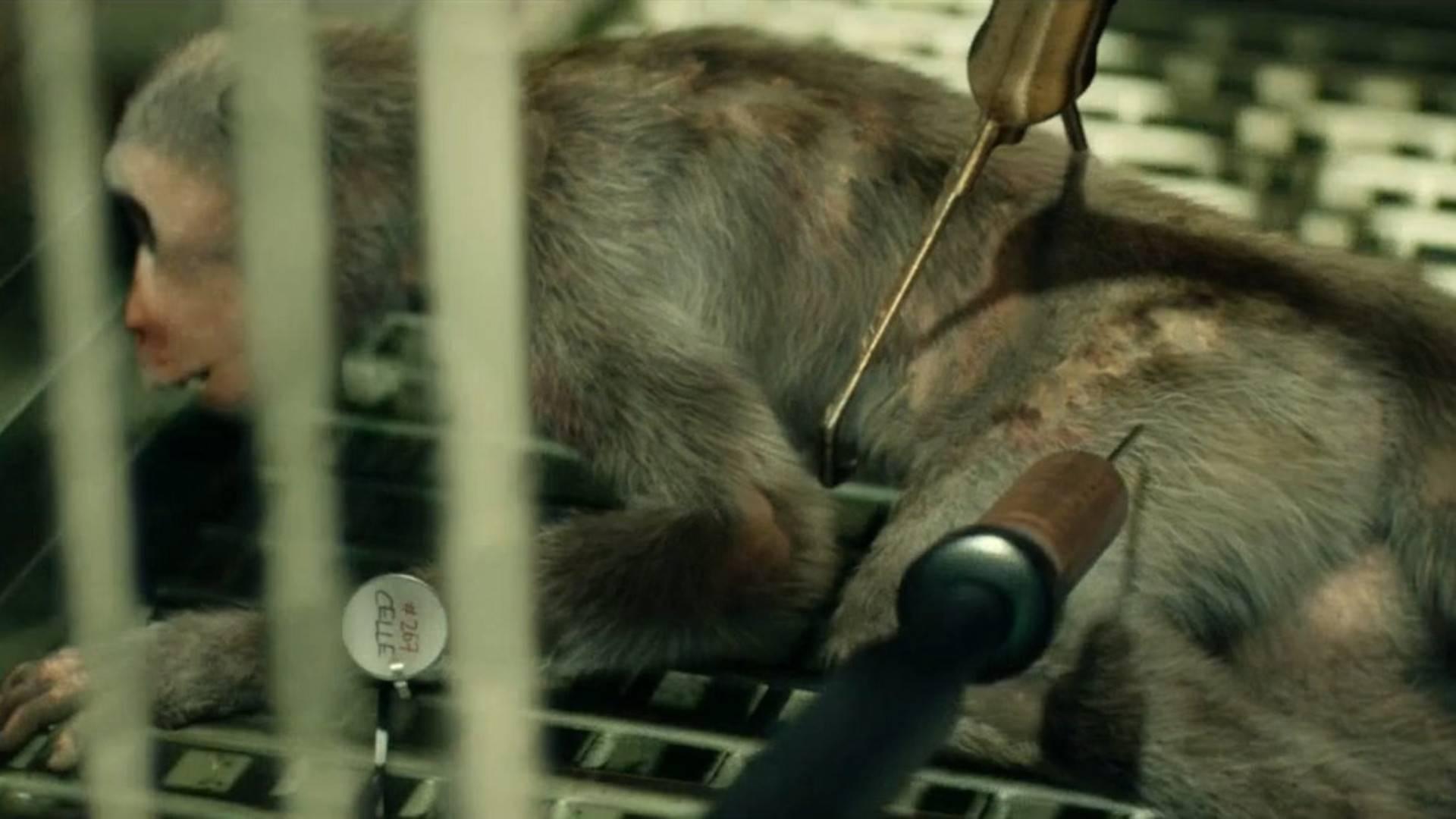 """探寻病毒之王""""埃博拉""""的源头,猪、猴子、还是蝙蝠?《血疫06》"""