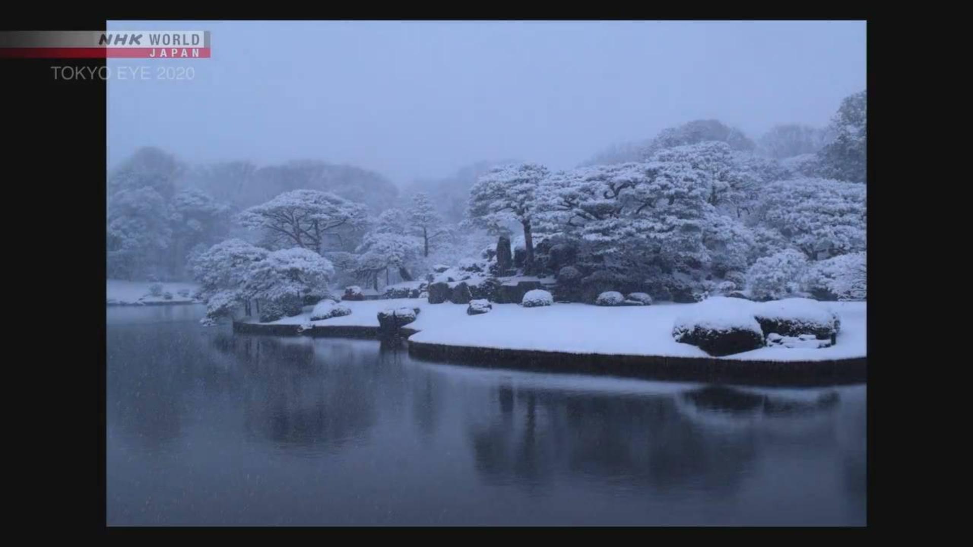 东京视角2020.四季:东京的美丽庭园
