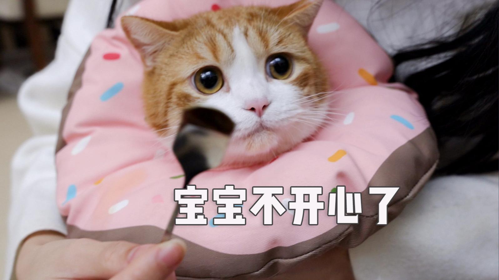 零食混药药骗猪吃,你当我是猫?什么都吃?