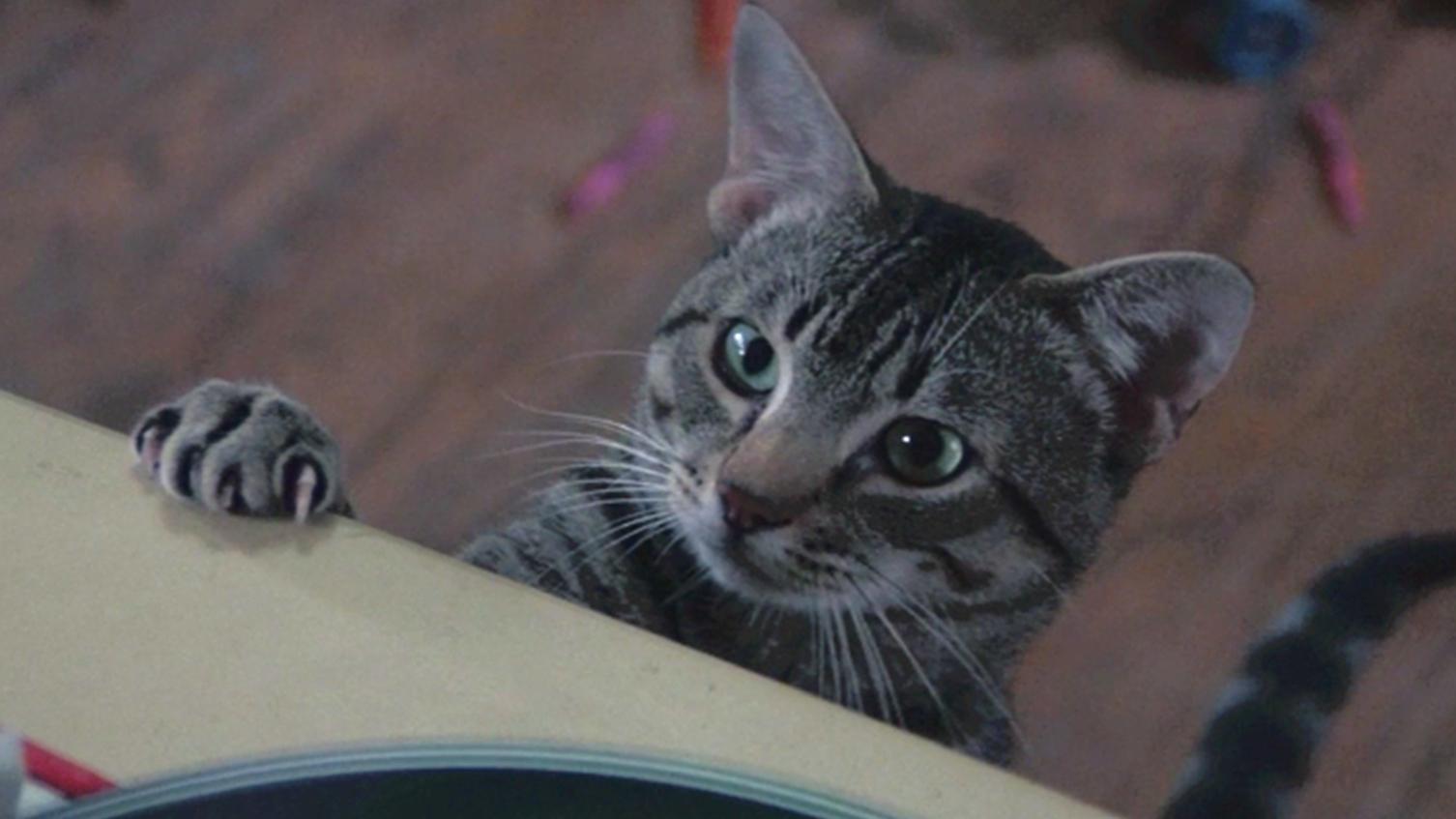 女孩阳寿已尽却还活着,原来她收养的流浪猫,每晚都和死神决斗!