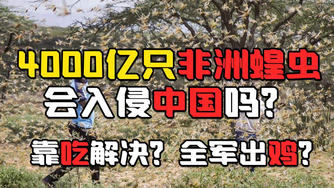 【非洲蝗灾】4000亿只蝗虫会入侵中国吗?科普分析