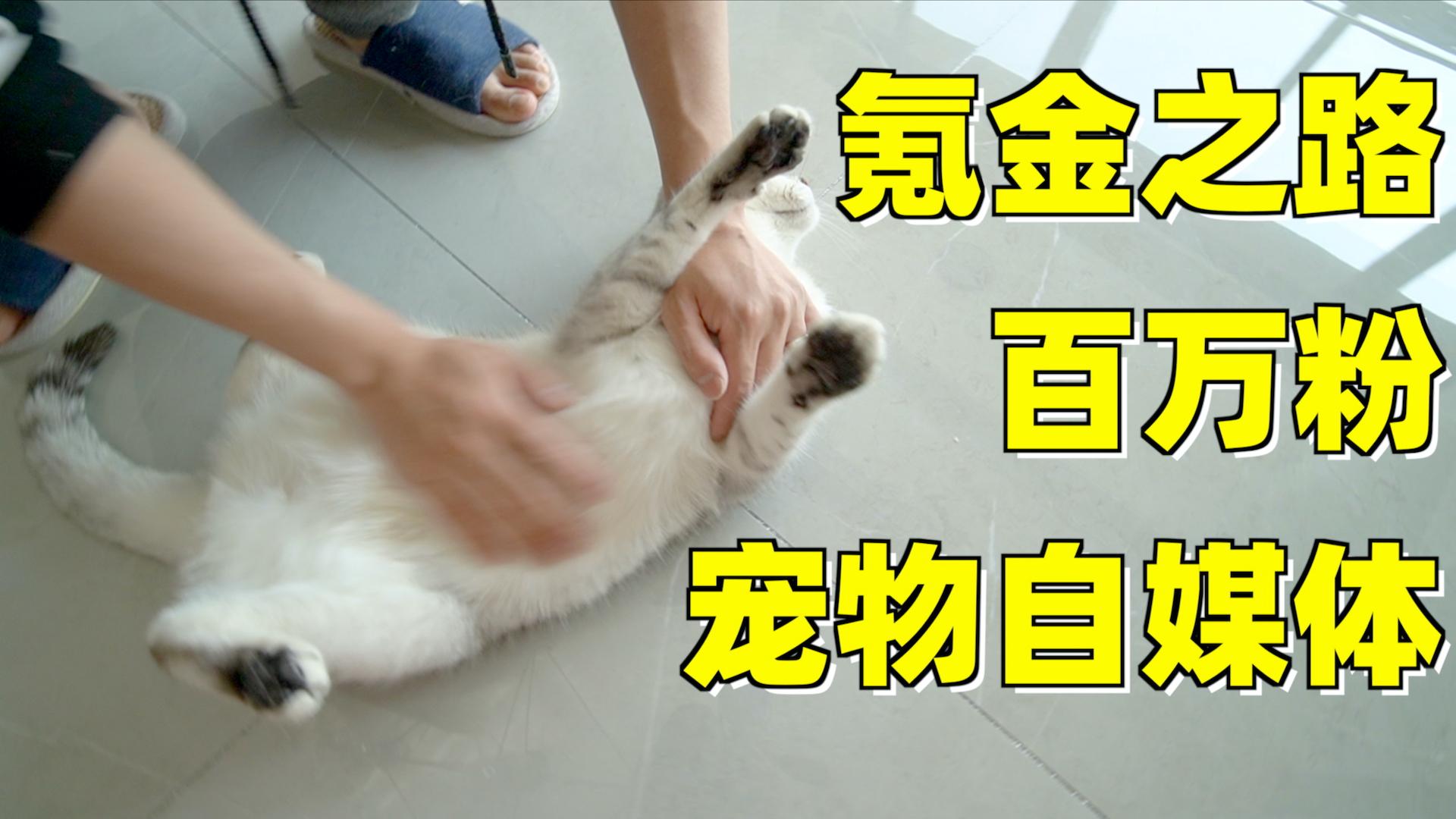 全网百万粉的宠物自媒体,给家里猫咪吃的用的都是啥?