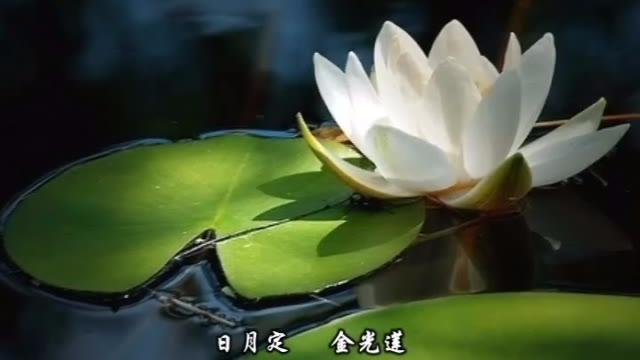 刘珂矣-《忘尘谷》MV