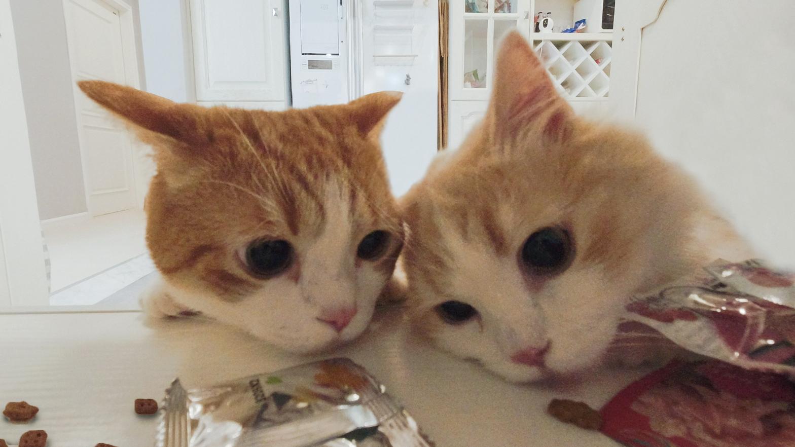 主人忘锁零食柜,猫:机会来了......监控画面惨不忍睹
