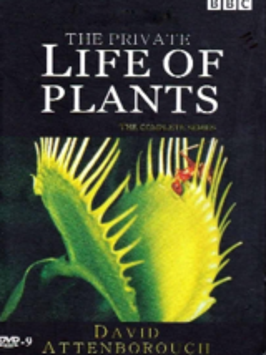 [纪录片][植物的私生活]