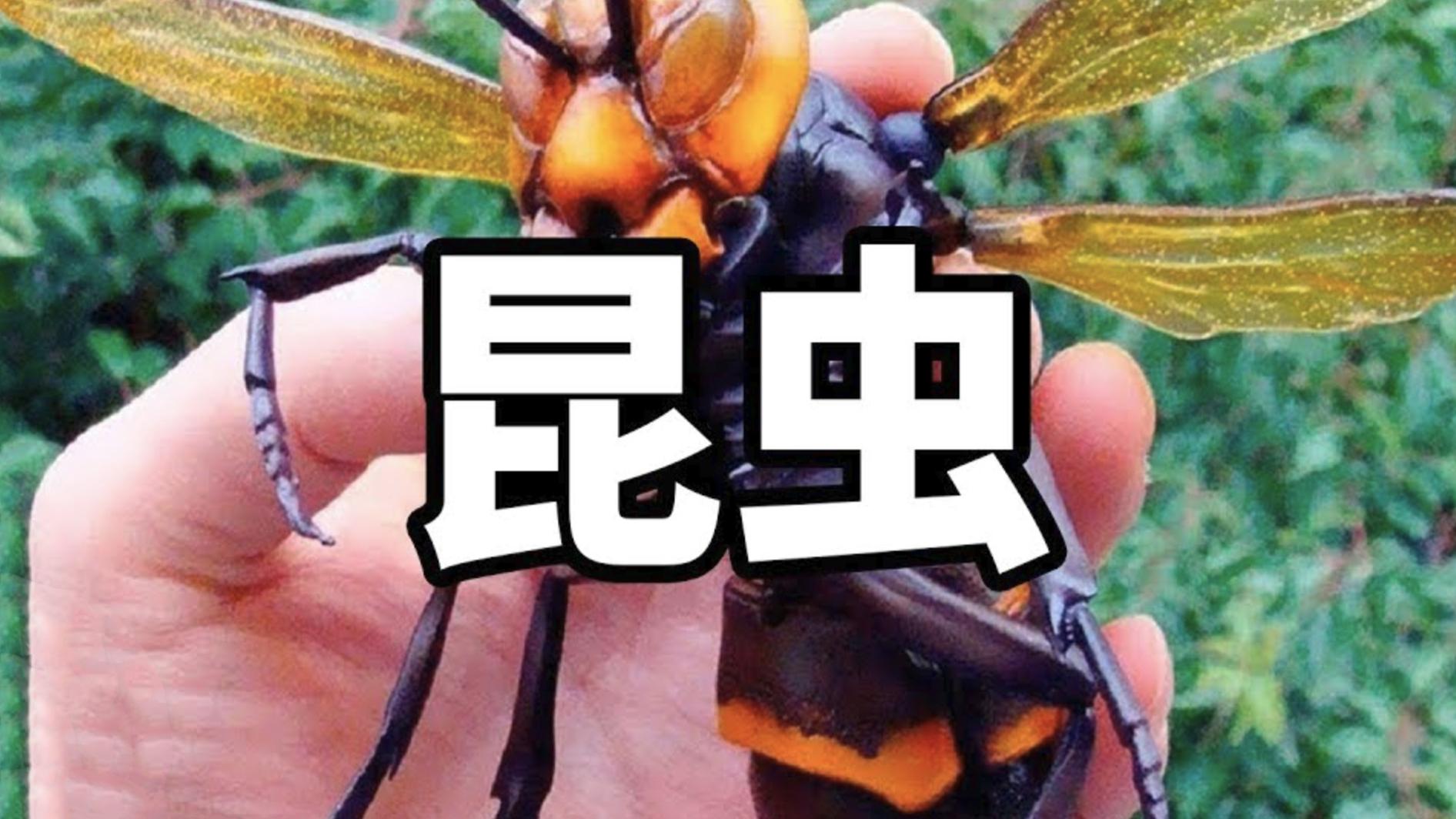 『老高与小茉』《你所不了解的昆虫》1080P