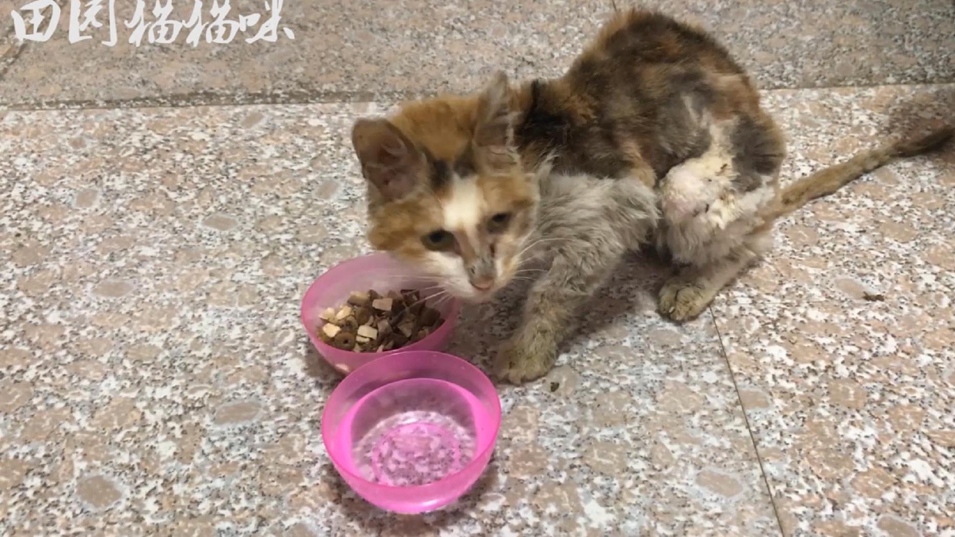 流浪猫:骨瘦嶙峋的小猫咪被咬掉一部分耳朵,好可怜