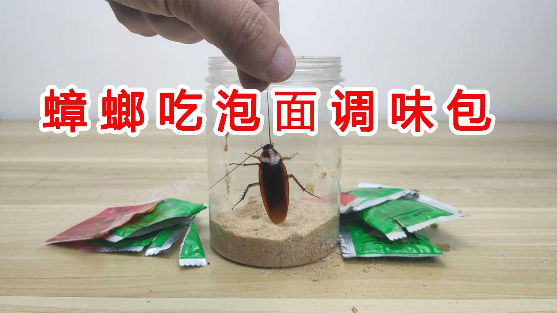 给蟑螂吃泡面调味包会怎么样?万万没想到如此重口味!