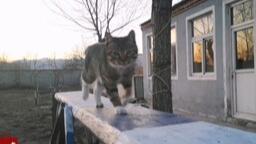 【狸花猫】沙雕教官带一个傻特种猫开始军事障碍之旅(独木桥阶段)