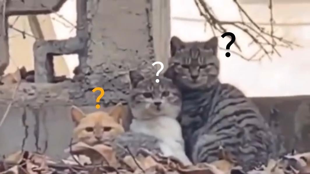 猫 咪 迷 惑 行 为 大 赏