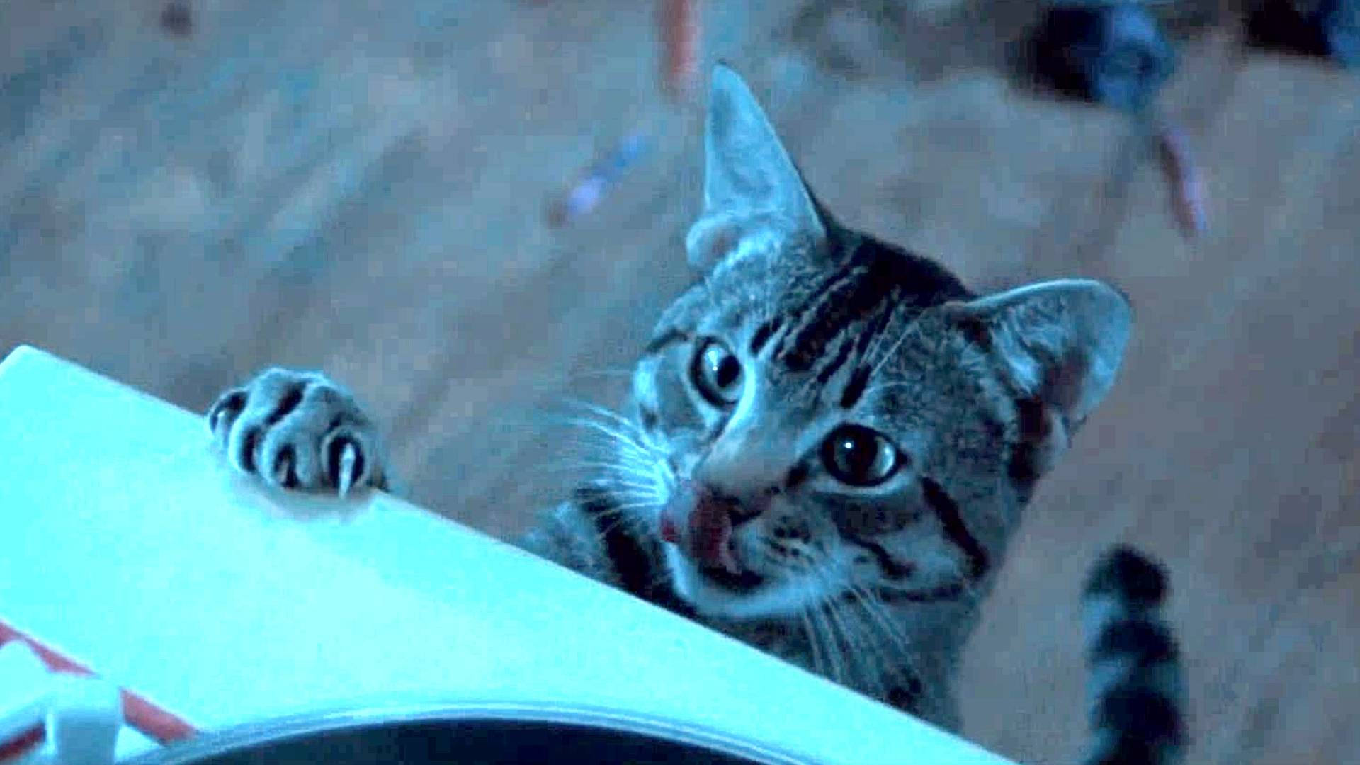 奇幻片:女孩阳寿已尽却依然活着,原来她养的猫,每晚与死神决斗