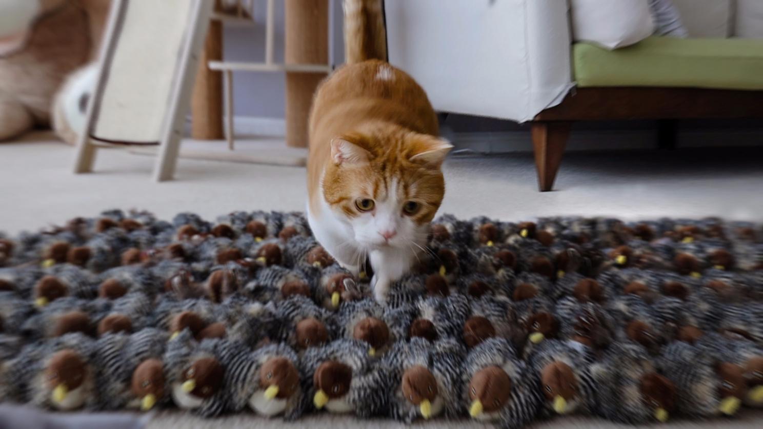 家里突现100只鸟,猫玩儿疯了,冲就完了!
