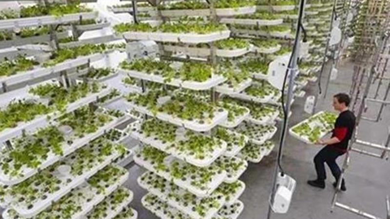在高楼里种菜,效率高390倍,让城市人吃到1公里之内种的菜