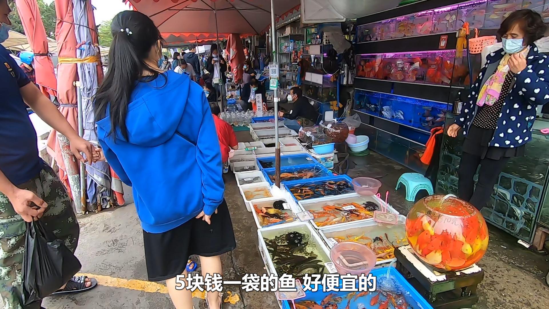 鱼友粉丝见面,相约广州最大观赏鱼市场,5块钱就能买一大袋鱼!