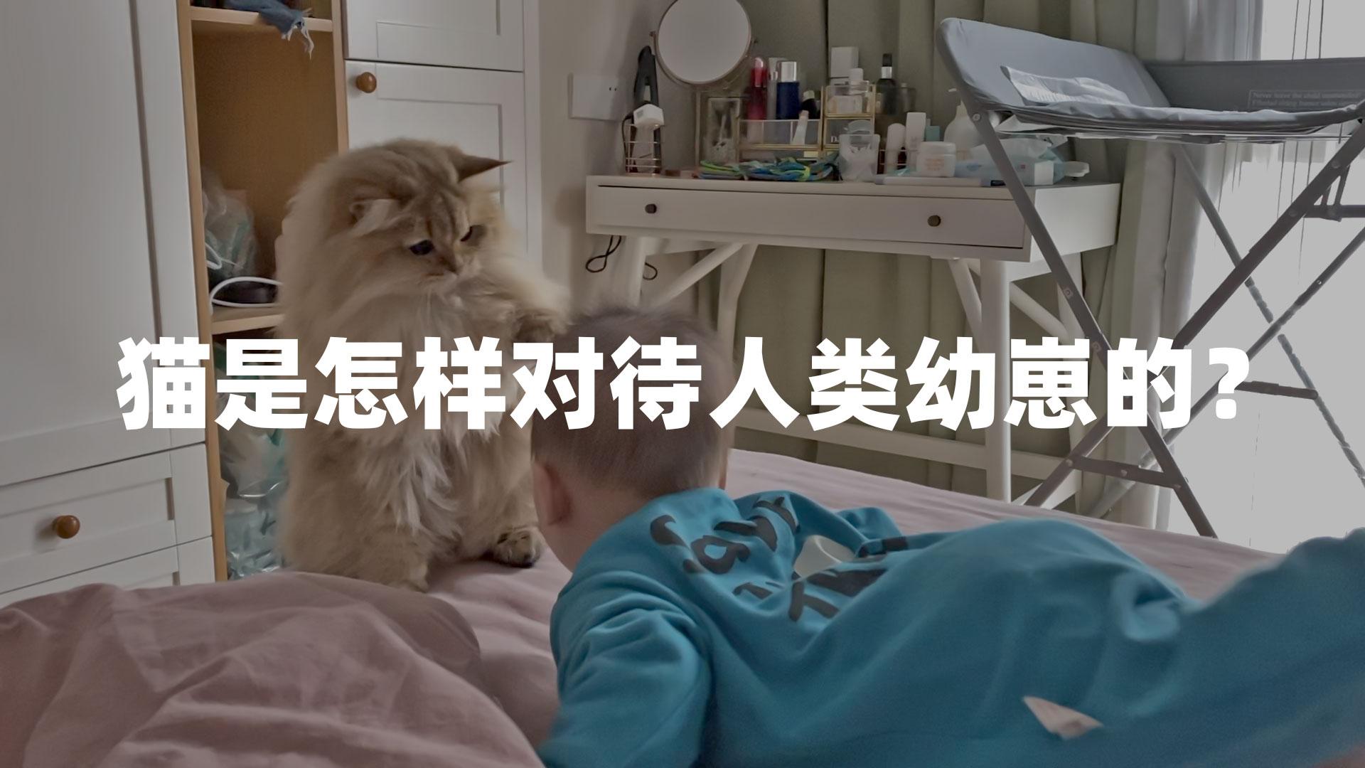猫怎样对待人类幼崽?金渐层麻糬差点对弟弟动手,见姐姐一秒变脸【两个人一条狗】