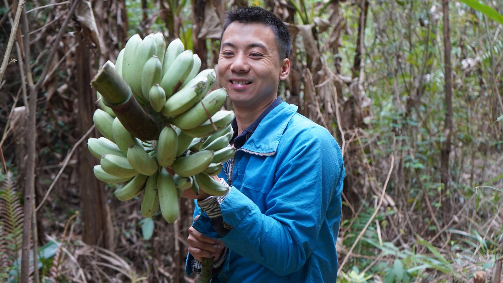 华农兄弟:野果没摘到,那就砍一把芭蕉,挖一个竹笋回去