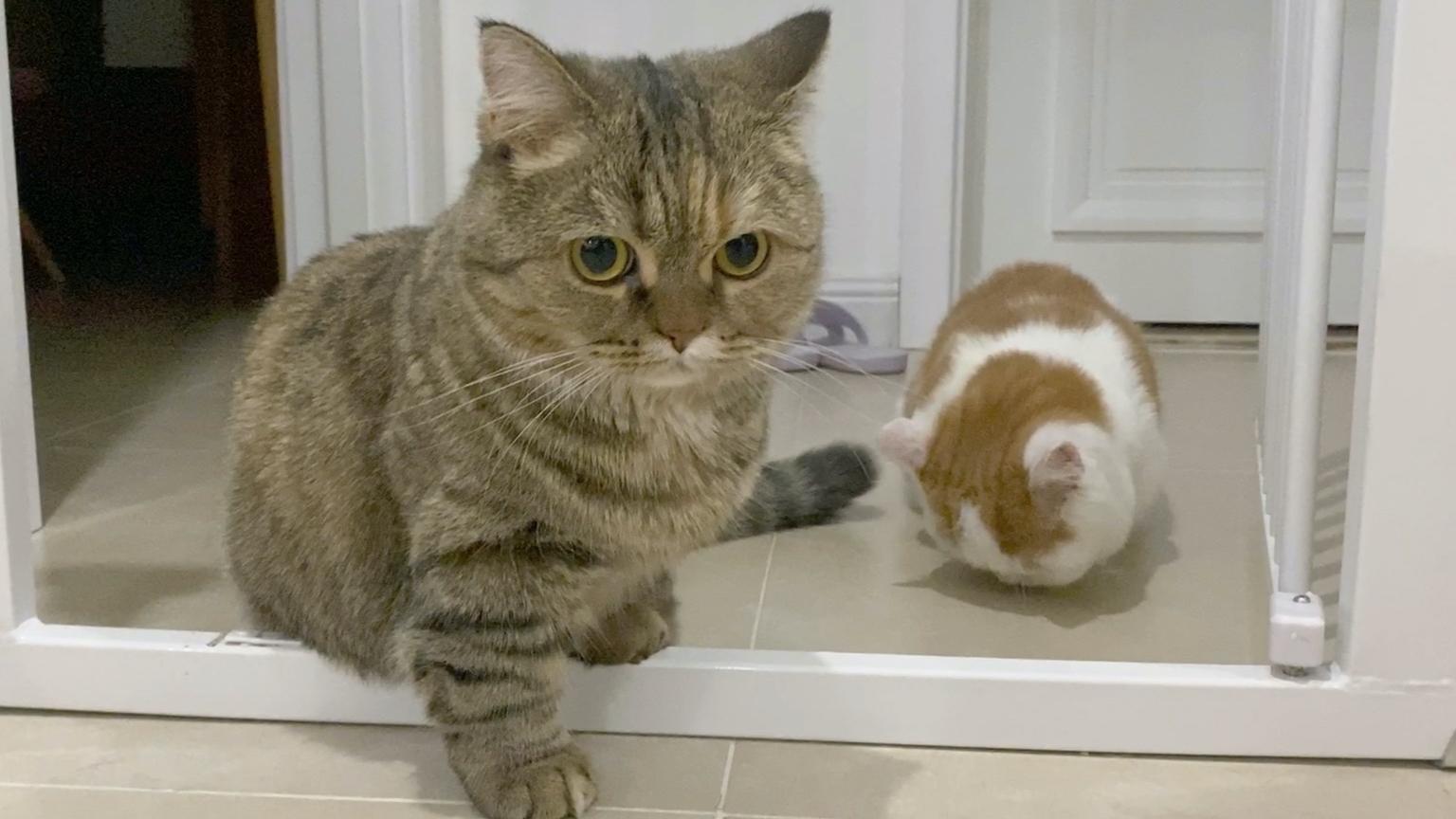小虎:你的猫你自己带!别老麻烦我!