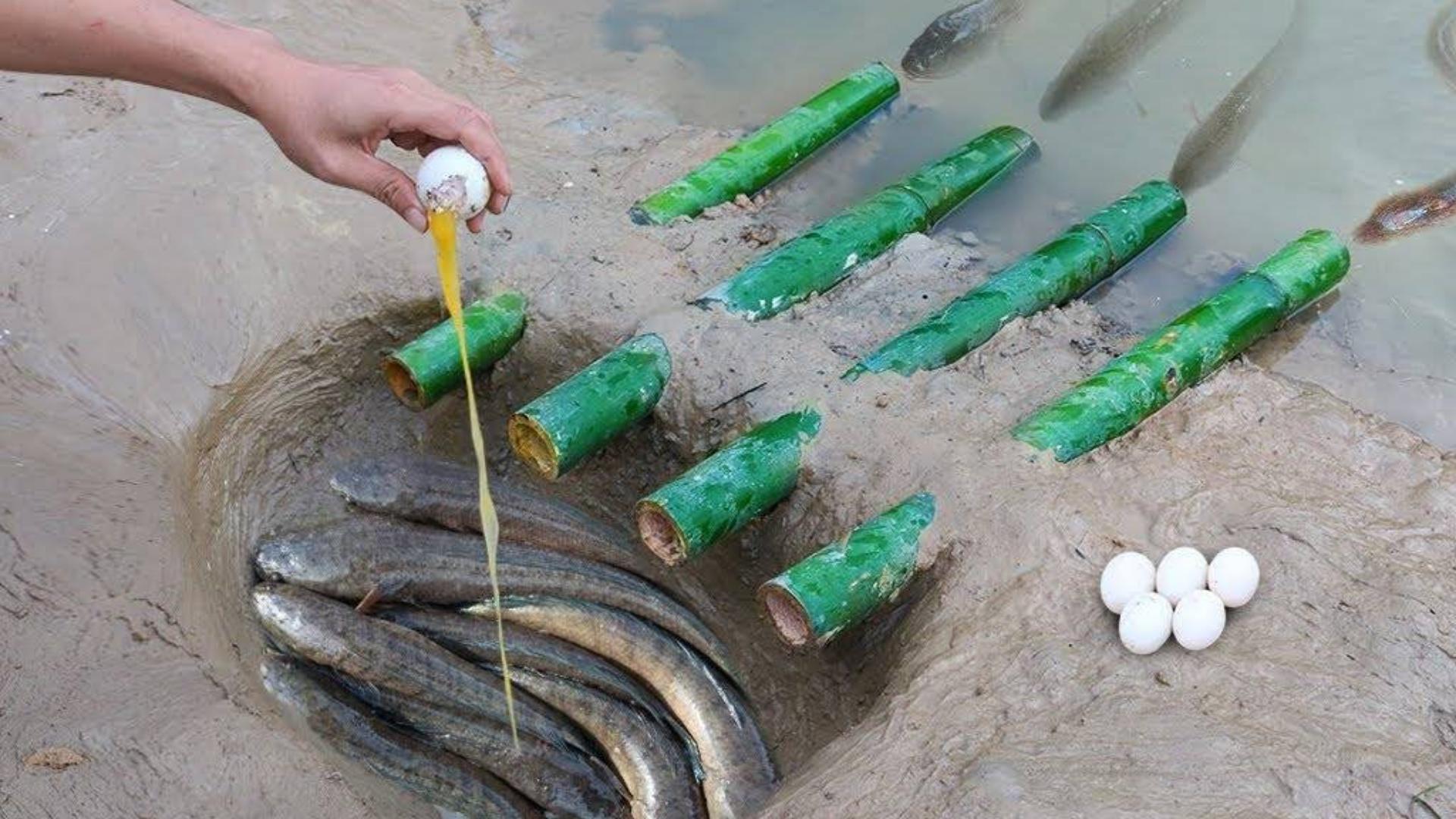 用竹子特有鱼类捕获系统 - 捕捞渔船使用鸭蛋