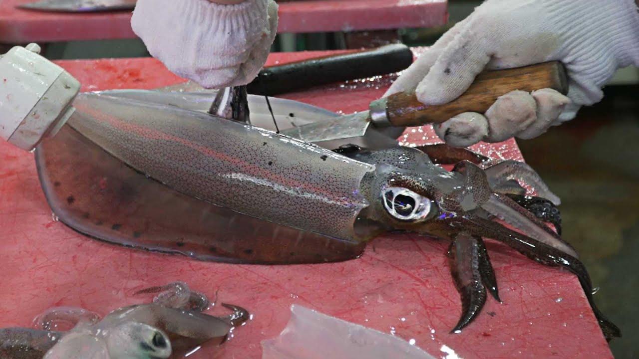 刚捞上来的鱿鱼,韩国大厨现场宰杀,吃一口你就知道什么叫新鲜!